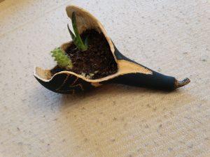 Maceta hecha de calabaza