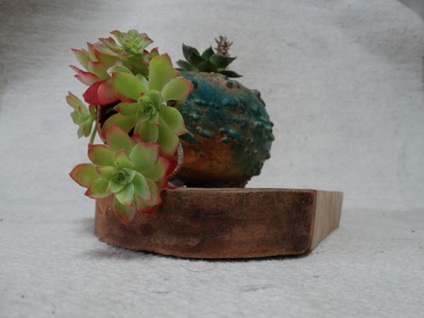 plantas para escaparateria