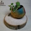 macetero de cactus ecologico
