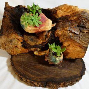 tiesto sostenible tronco madera