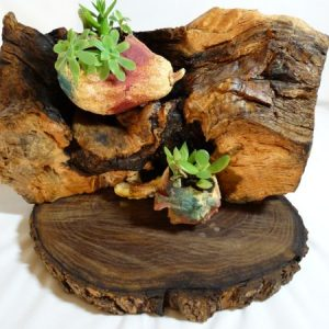macetero ecologico troncos