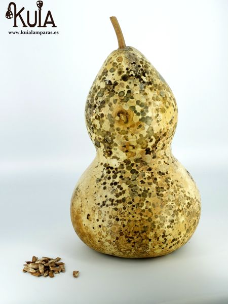 Semilla de calabaza del peregrino gigante